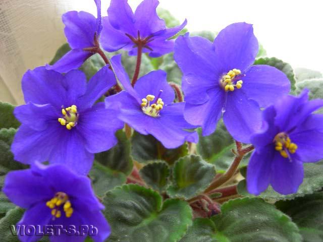http://violet.my1.ru/_ph/2/257616201.jpg